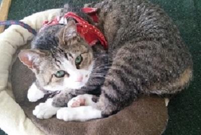 便利屋 猫の手サービスのイメージ